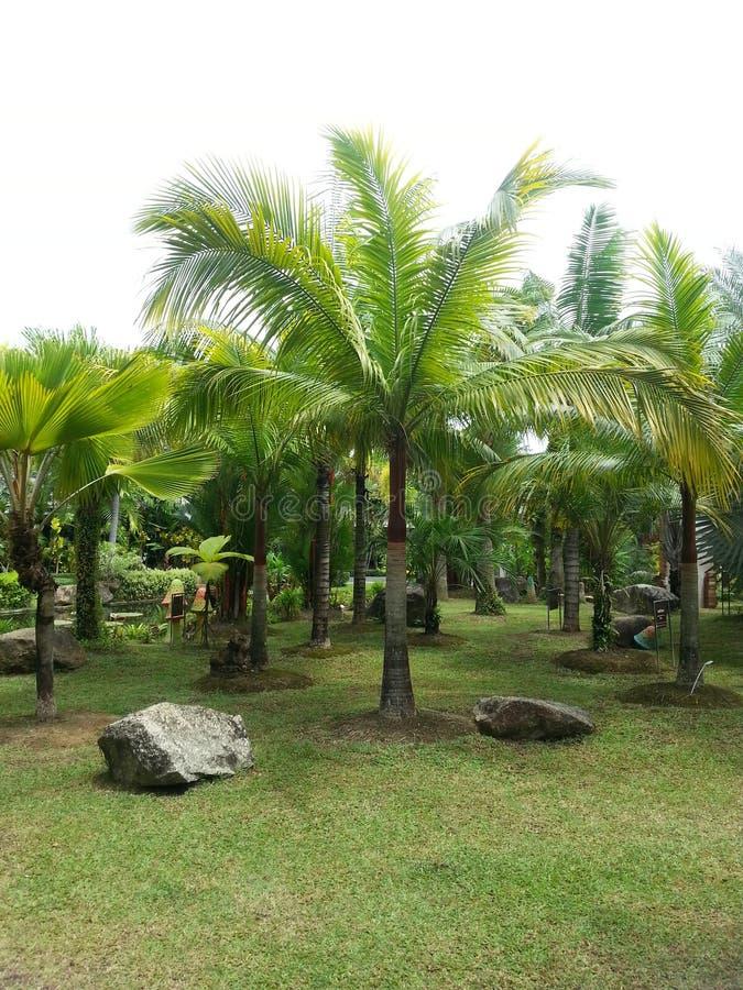 Palmtrees überall stockfotografie