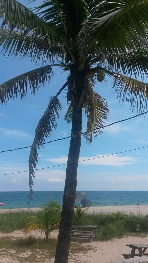 Palmtrees влюбленности стоковые фото