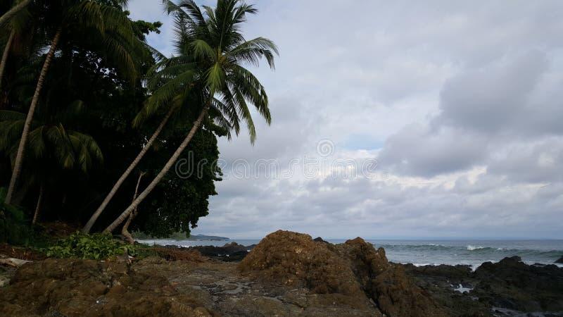 Palmtrees на Montezuma Коста-Рика стоковые фотографии rf