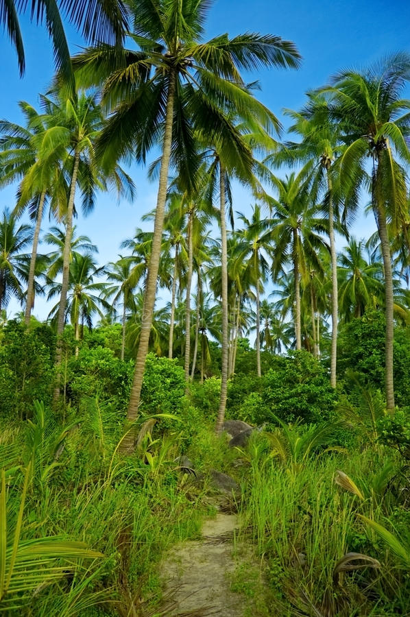 Download Palmtrees stock photo. Image of palm, destinations, blue - 18330078
