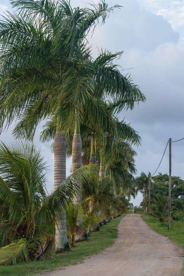 Palmtrees στοκ εικόνες
