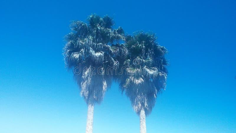 Palmtrees fotografia de stock royalty free