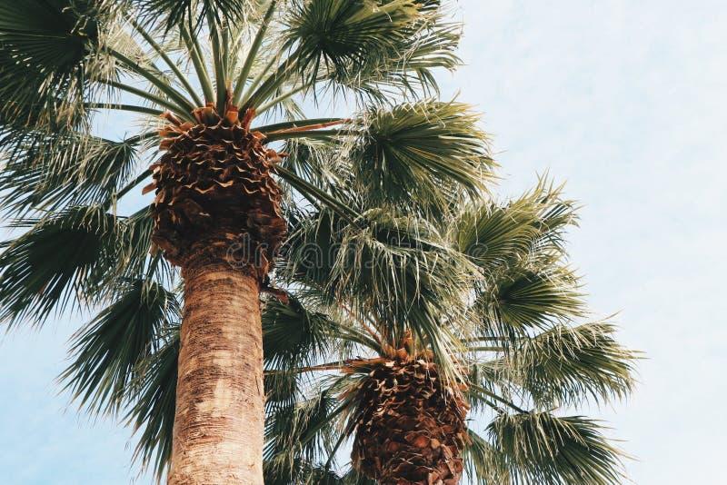 Palmtrees royaltyfria bilder