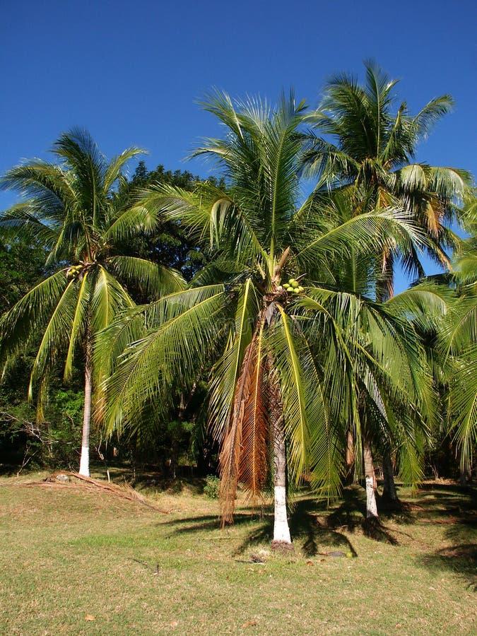 Palmtrees avec les joncteurs réseau peints photos libres de droits