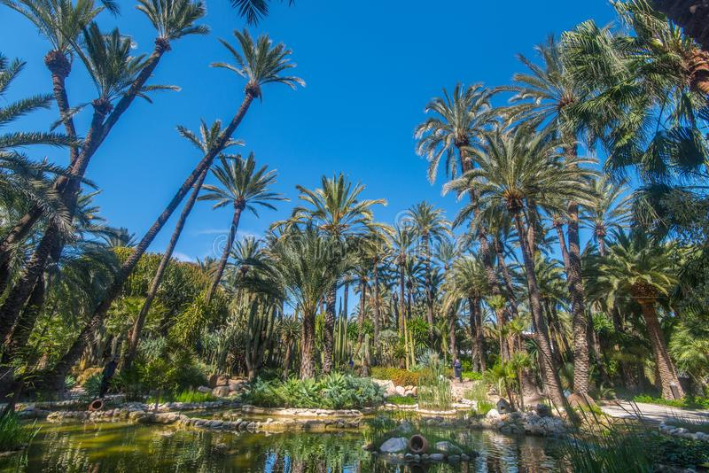 Download Botanic Garden Huerto Del Cura In Elx Editorial Photography - Image of heritsge, palmtrees: 113364547