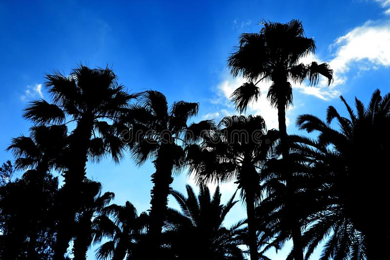 Palmtrees contra el cielo imagen de archivo libre de regalías