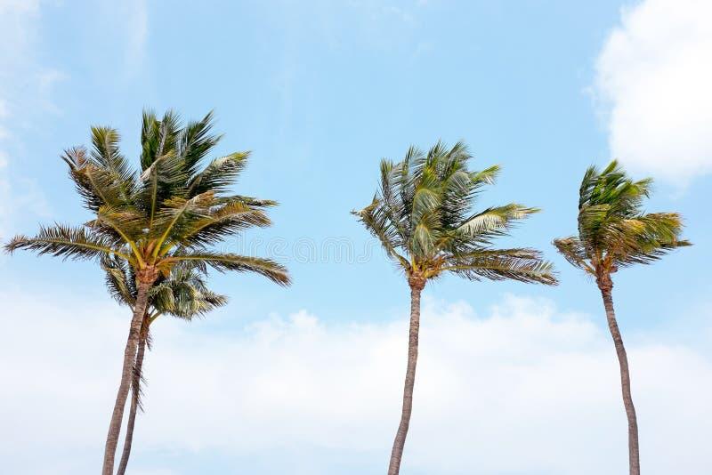 Palmtrees de ondulação contra um céu azul fotos de stock royalty free