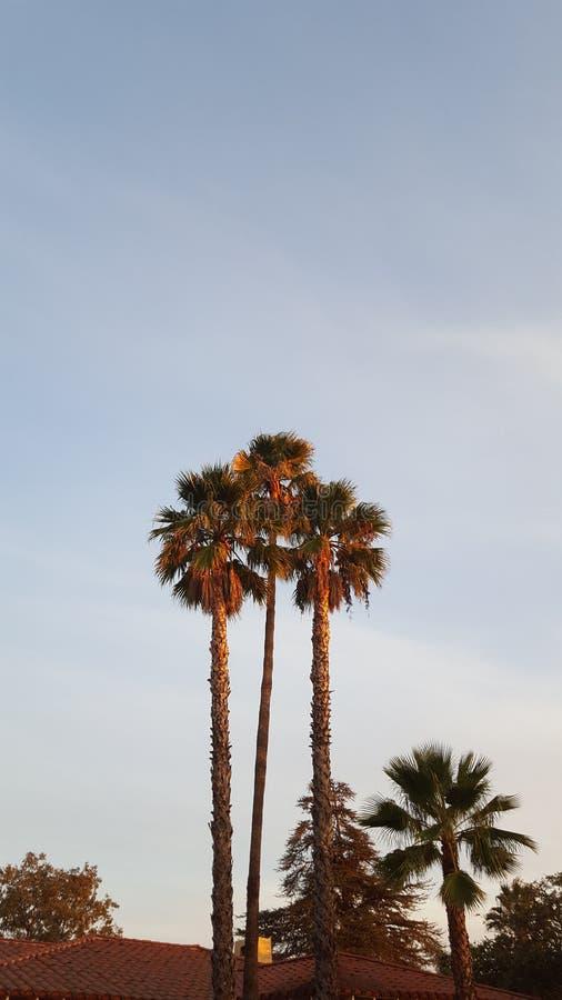 Palmtrees en la puesta del sol imagen de archivo