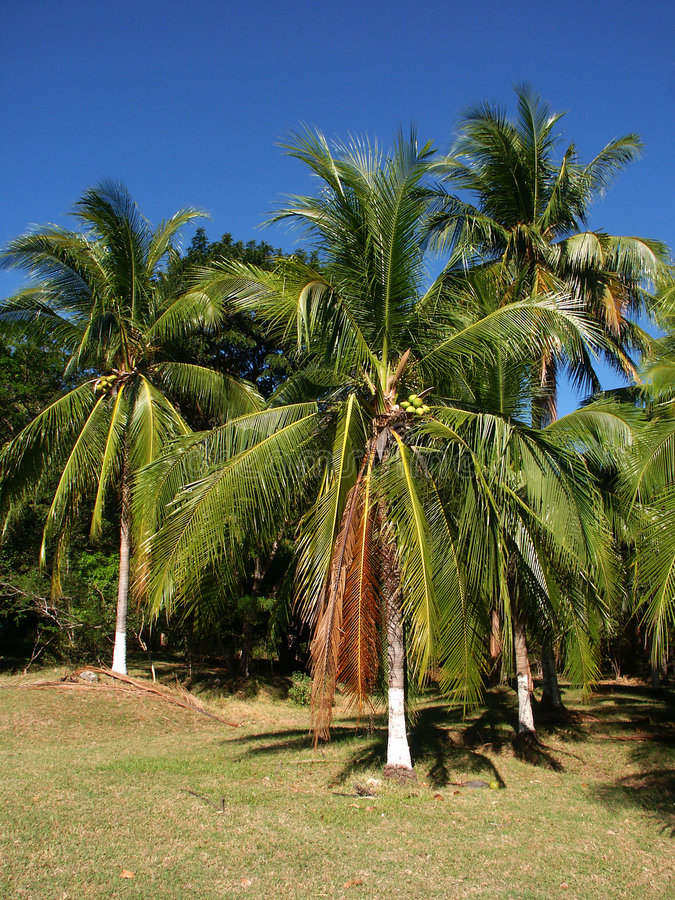 Palmtrees with painted trunks royalty free stock photos