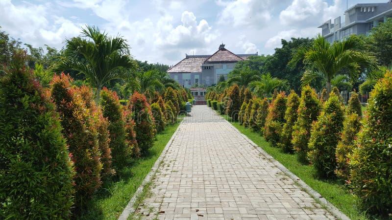 Palmtrees parkerar in sjukhuset, med naturliga växter som ger intrycket av komfort och stillhet royaltyfri fotografi