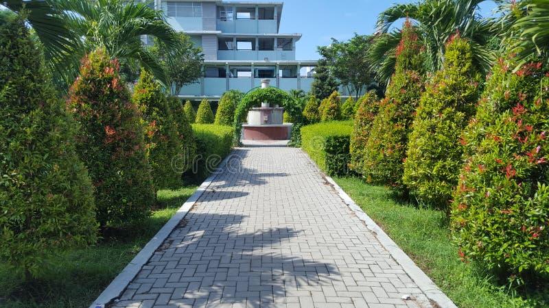 Palmtrees parkerar in sjukhuset, med naturliga växter som ger intrycket av komfort och stillhet royaltyfria bilder