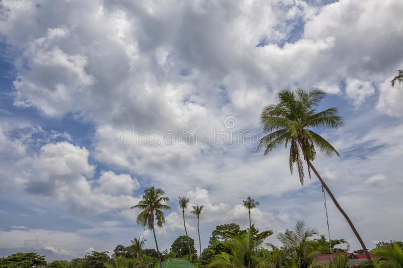 Palmtrees rising in the blue sky. Tropical sunset palm tree in Thailand stock photo