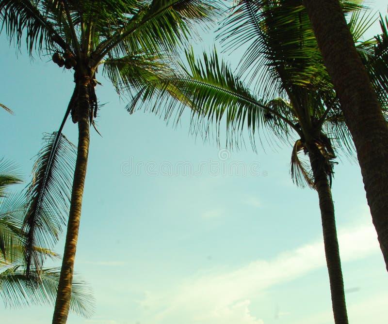 Palmtrees royaltyfria foton