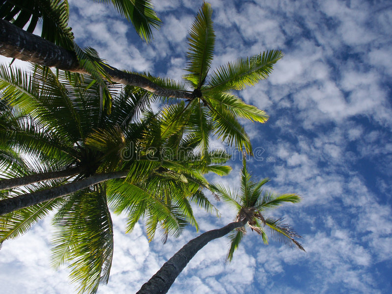 Palmtrees and sky stock photography