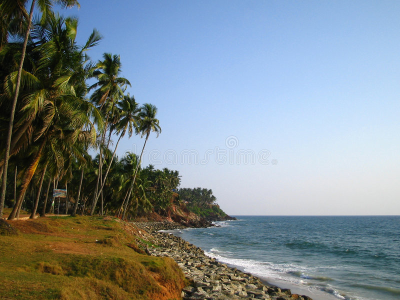 palmtrees varkala zdjęcie stock
