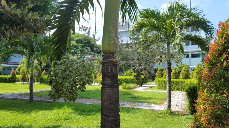 Palmtrees w parkowym szpitalu z naturalnymi roślinami które dają wrażeniu wygoda i spokój, zdjęcia stock