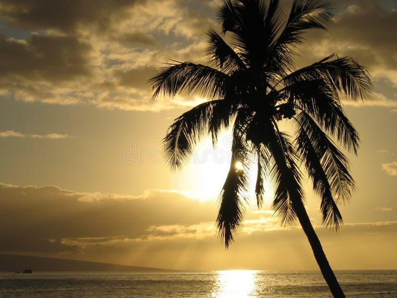 palmtreesolnedgång royaltyfri bild