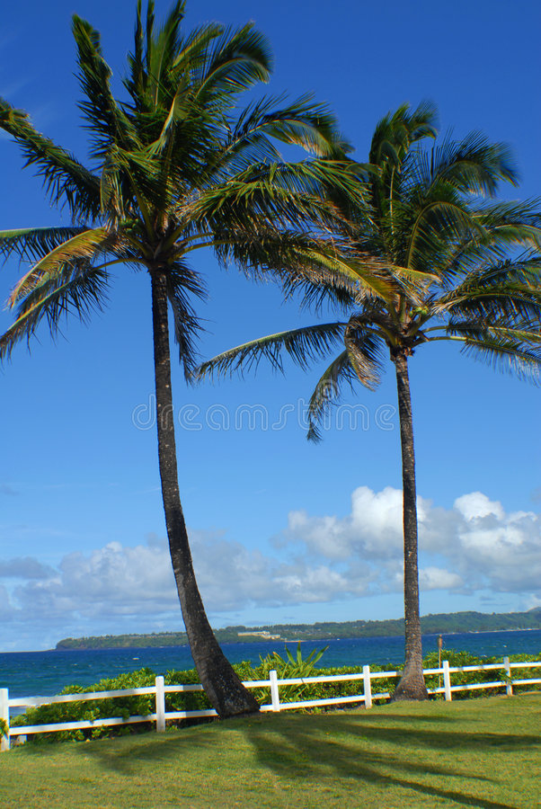 PalmTreesOn Hawaii royalty free stock photo