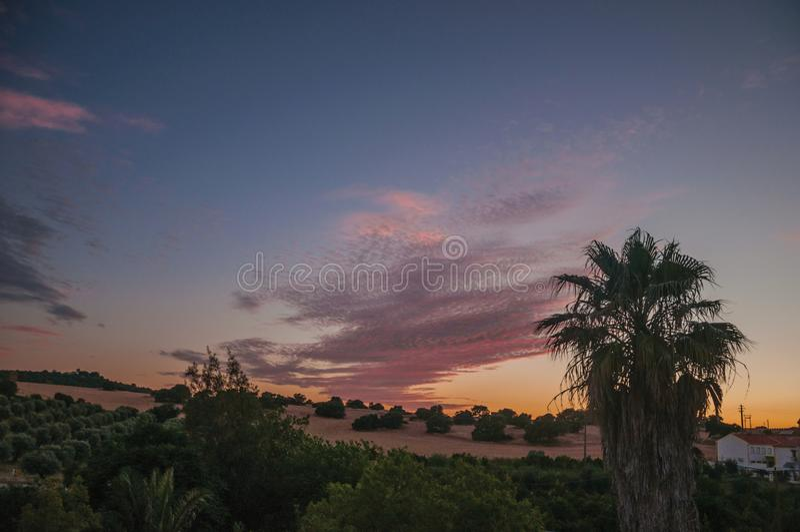 Palmtreetops en multicolored hemel in een landbouwbedrijf stock afbeeldingen