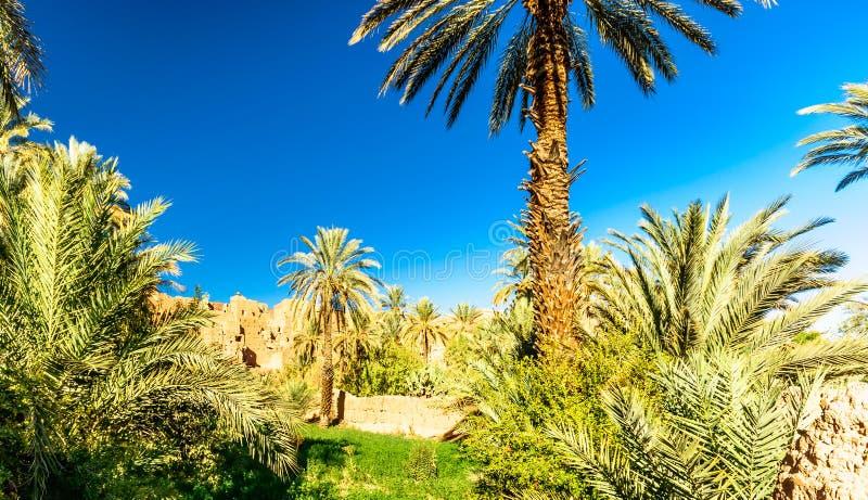 Palmtuin van Kasbah Caids naast Tamnougalt in Draa-vallei - stock afbeelding