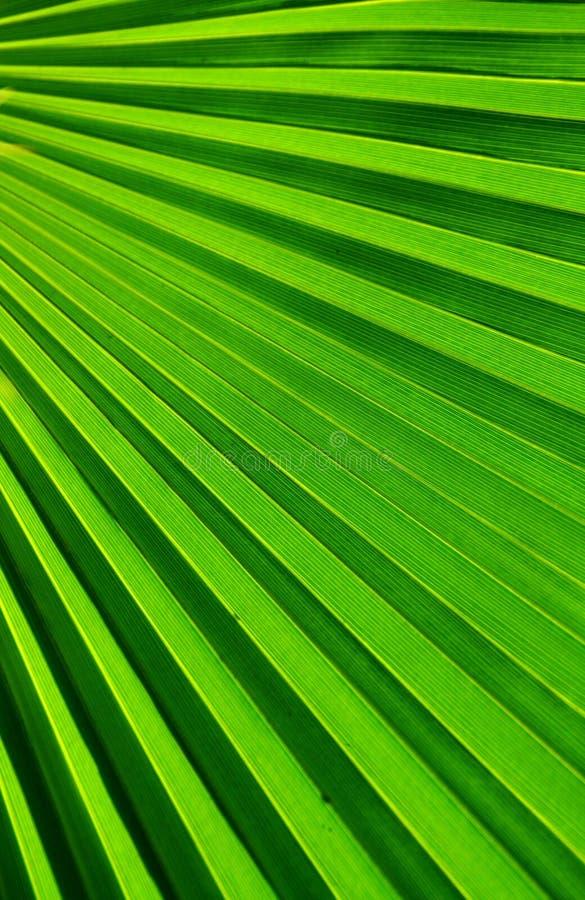 Palmvarenblad stock foto's