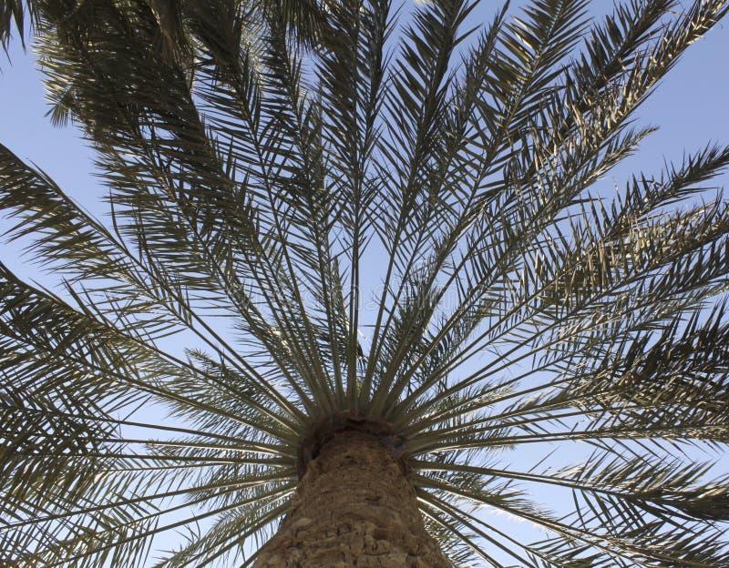 Palmvarenbladen in Perspectief royalty-vrije stock fotografie