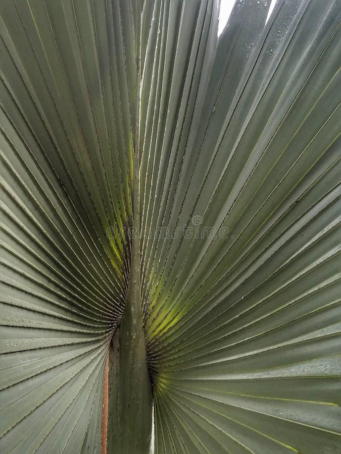 Palmwedel stockbilder