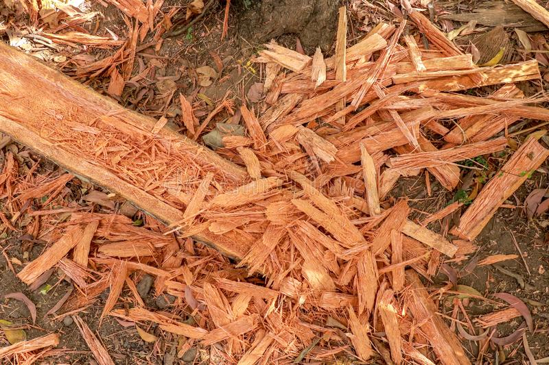 Palmwood chips. Wooden shavings from a worked tree trunk. A log with a hollow groove. Handwork of skilled carpenters. stock photos