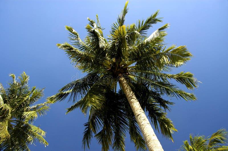 Download Palmy zdjęcie stock. Obraz złożonej z plenerowy, niebo - 126204