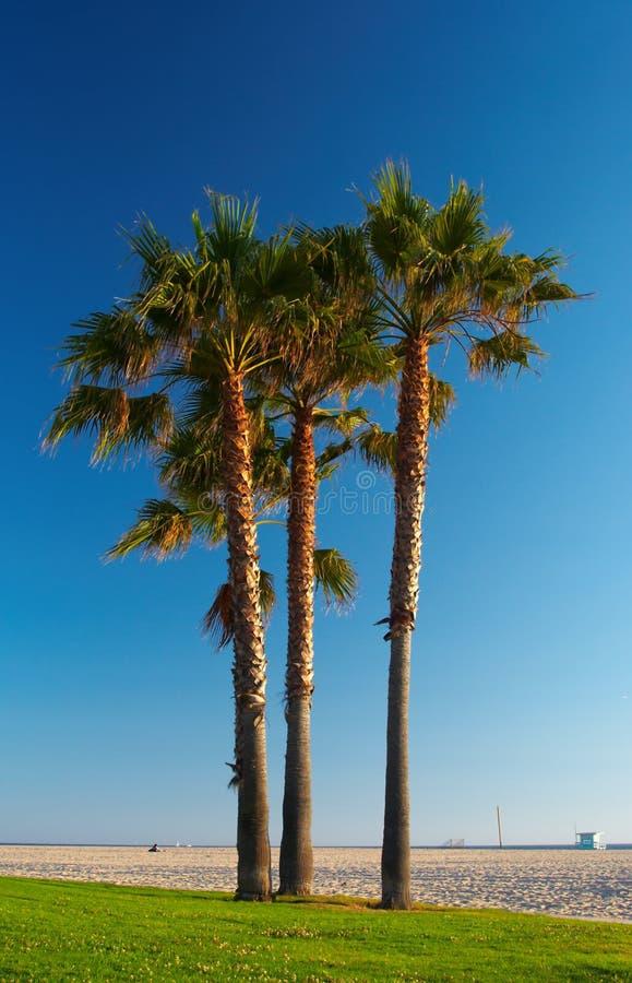 palmy obrazy stock