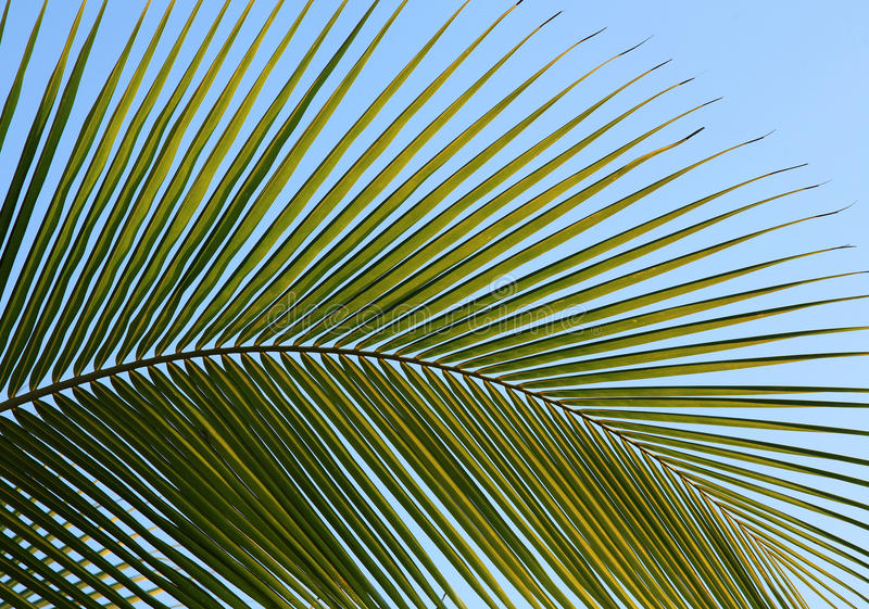 Palmy fotografia royalty free