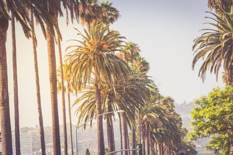 Palmy Beverly Hills zdjęcia royalty free
