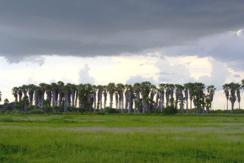 palmy burz nad drzewami obraz stock