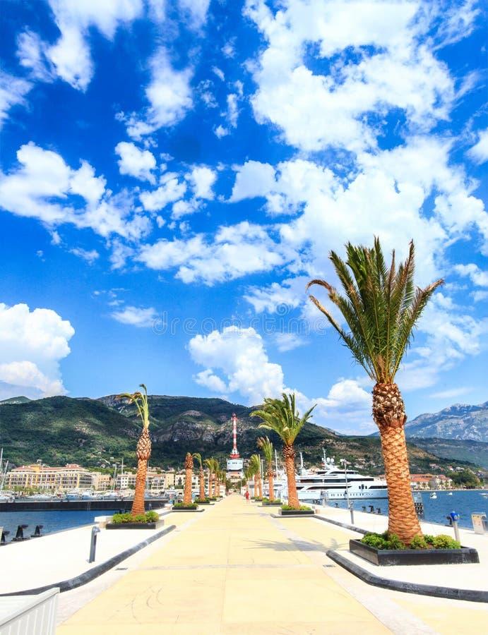 Palmy dekoruje molo nowożytny deptak Porto Montenegro, zalewający z jaskrawym słońcem obrazy stock