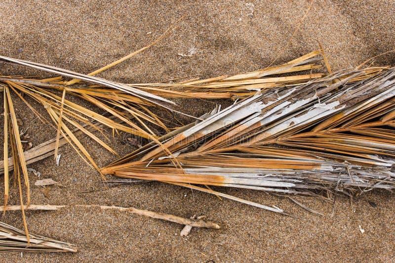 Palmy gałąź szczegółu Organicznie Organicznie obraz stock