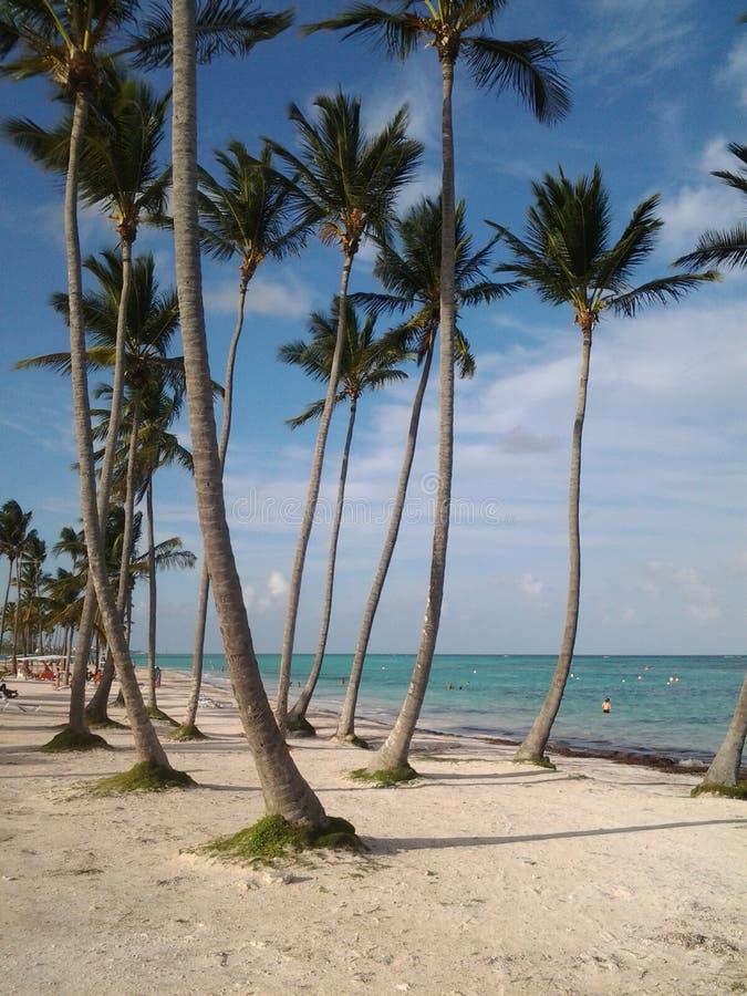 Palmy horyzont obrazy stock