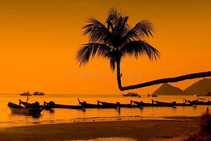 Palmy i łodzie, Koh Tao wyspa - Tajlandia obrazy royalty free
