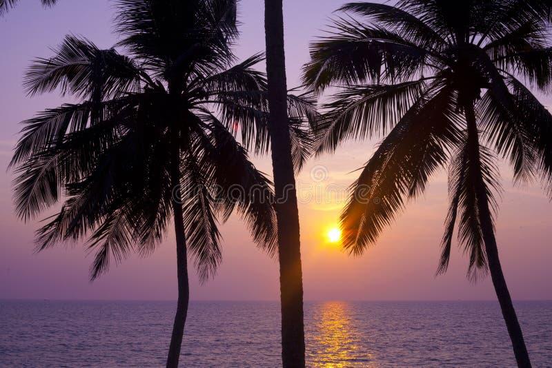 Palmy i słońce, zdjęcie stock