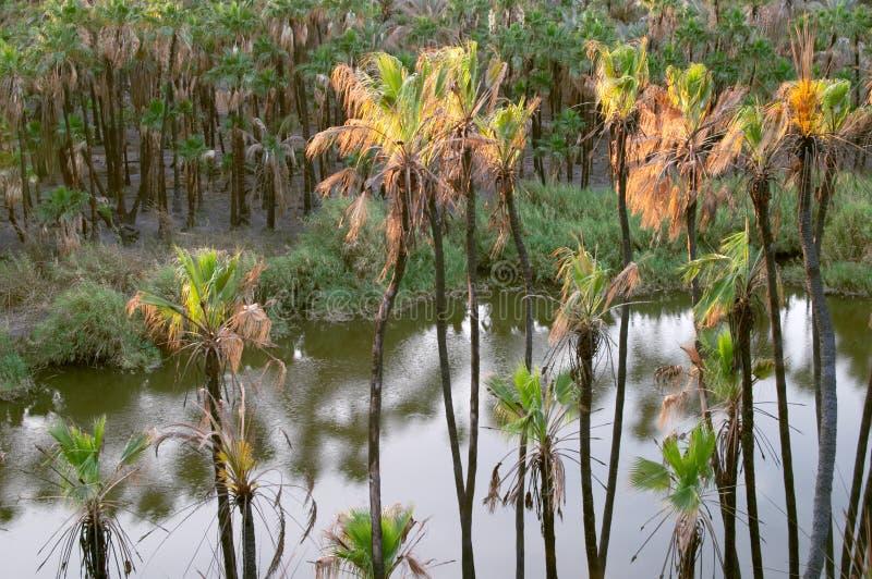 palmy kokosowe zdjęcia stock