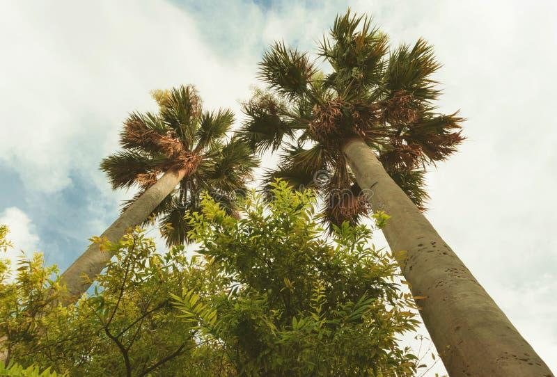 Palmy kokosowe widoczne z dołu zdjęcie stock