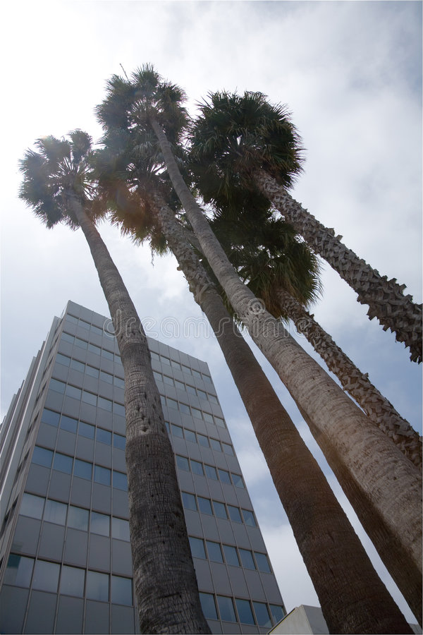 palmy miast, obrazy royalty free