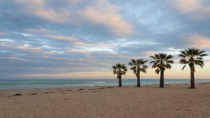 Palmy na plaży obraz royalty free