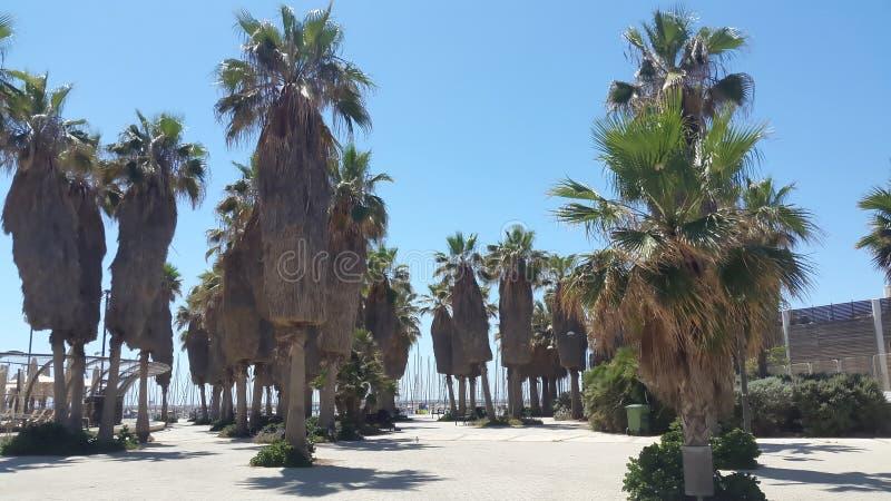 Palmy na plaży obrazy royalty free
