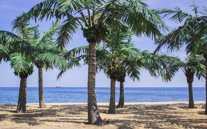 Palmy na plaży zdjęcie royalty free