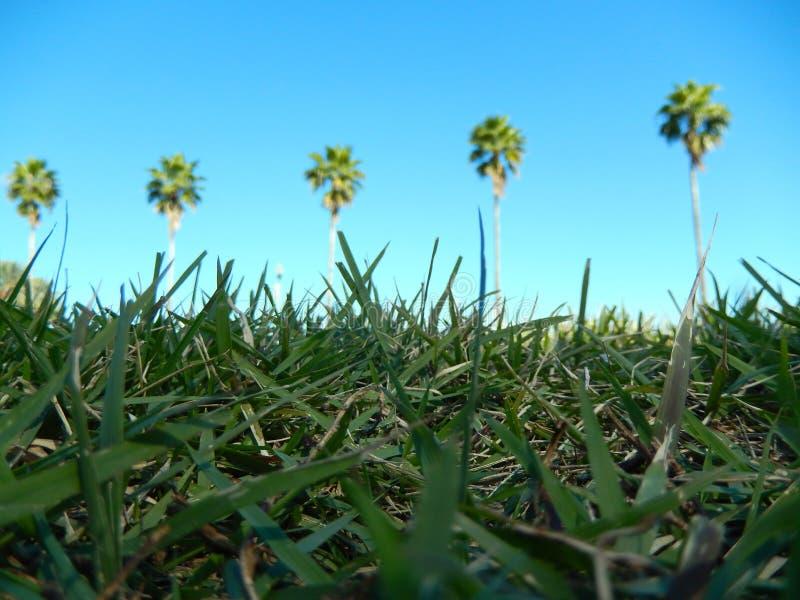 palmy na zielenieją pole zdjęcia royalty free