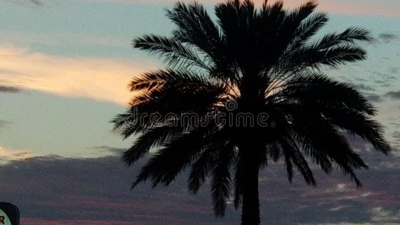 Palmy niebo w mój ręce zdjęcia stock