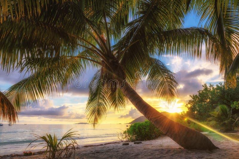 Palmy plaża przy wschodem słońca na Praslin wyspie, Seychelles obrazy royalty free