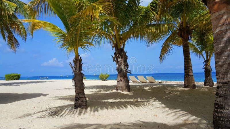 Palmy plaża w Chankanaab parku obrazy stock