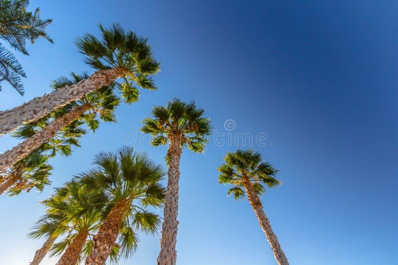Palmy przeciw niebieskiemu niebu fotografia stock