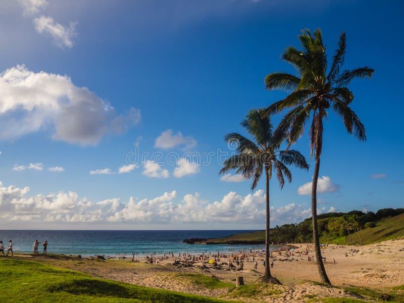 Palmy przy Anakena wyrzucać na brzeg w Wielkanocnej wyspie w Chile fotografia royalty free